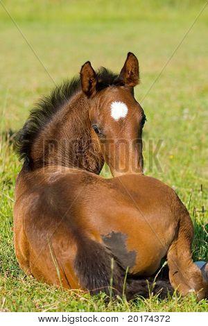 tkakehner foal