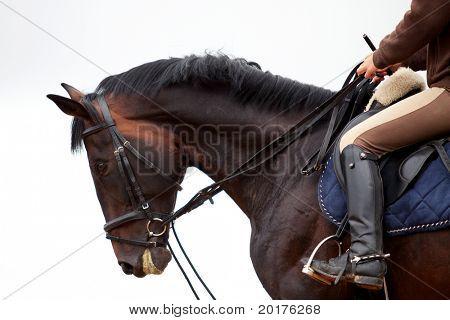 Formación: niña montando a caballo Bahía en lluvia en platz