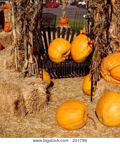 Pumpkins In A Chair