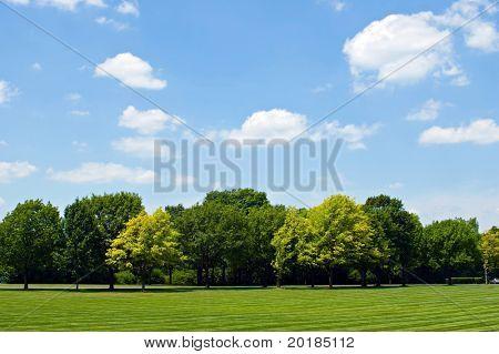 Linha de árvore com Sky