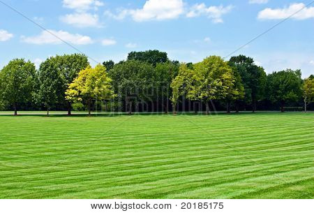 Lawn with Tree line