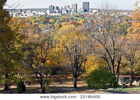 City on Tree Tops