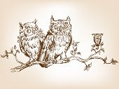 image of jock  - Three hand drawn funny owls - JPG