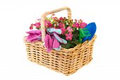 Pink Nicotiana flowers and gardening tools in basket isolated over white
