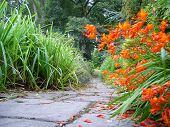 stock photo of crocosmia  - footpath leading into woods framed with crocosmia and ornamental grasses - JPG