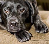 stock photo of sad dog  - dog - JPG