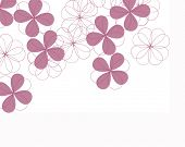 stock photo of fourleaf  - fourleaf clover flowers - JPG