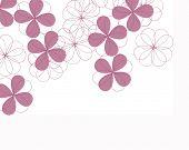 picture of fourleaf  - fourleaf clover flowers - JPG