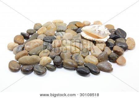 the shell on cobblestone