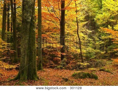 Autumn06
