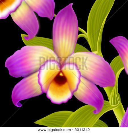Dendrobium Nobile Orchid Flower