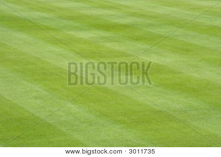 Baseball Field Grass