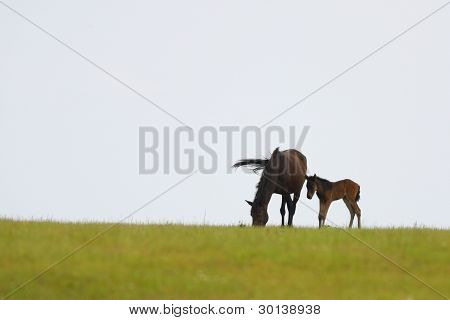 Little horses and his mother