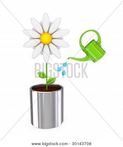 White flower in a chromed pot and green bailer.
