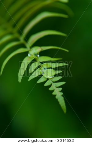 Exotic Ferns