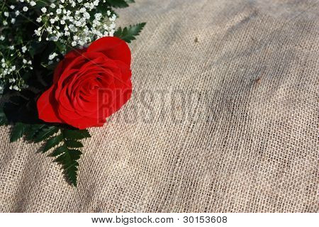A Red Rose and Baby's Breath on Burlap