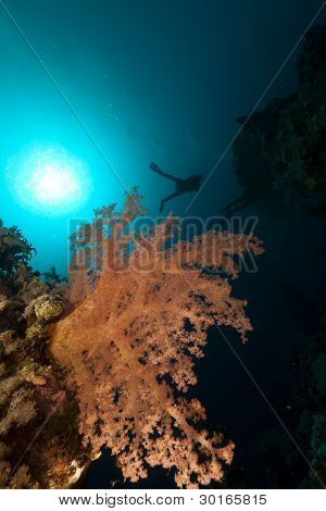 Tropical underwater world and diver in the Red Sea.