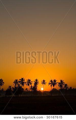 palms silhouette during sunrise