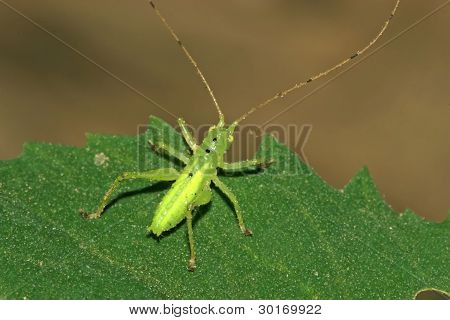 Insects On Green Leaf In The Wild