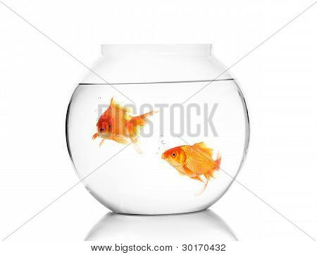 Gold fish in the bowel.
