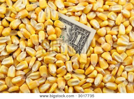 Cash Crop Vi