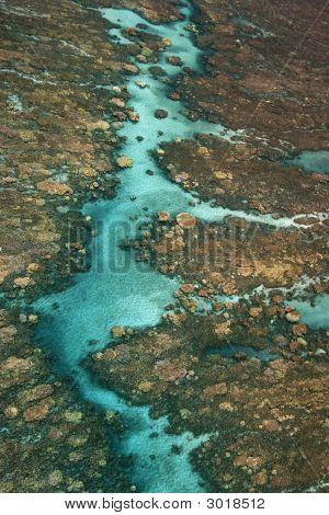 Tropischen Korallenriff.
