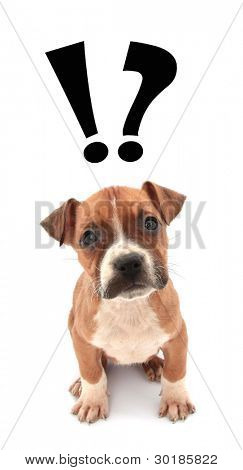 Se pregunta el pequeño cachorro de perro