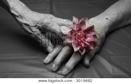 Hands And Flower
