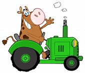 pic of moo-cow  - Happy Brown Cow Farmer In Red Tractor Waving A Greeting - JPG