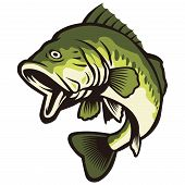 Largemouth  Bass Fish Green Color Nature Catch Illustration poster