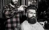 Beard Man In Barbershop. Hairstylist Serving Client At Barber Shop, Bearded. Hairdresser, Bearded Ma poster