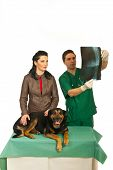 stock photo of animal x-ray  - Woman with veterinary man looking over dog X - JPG