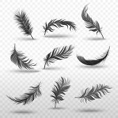 Set Of Falling Or Hovering Black Fluffy Feathers Realistic Style poster