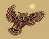 pic of nocturnal animal  - Flying and hunting owl bird - JPG