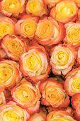 A Huge Bouquet Of Orange Roses. Orange Roses Background. Orange Roses Horizontal Seamless Pattern. O poster