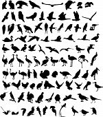stock photo of nightingale  - A hundred Silhouettes of different birds - JPG