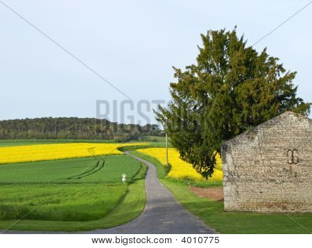 Road Through Bittercress Yellow Field