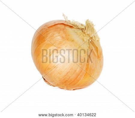 Single Onion Bulb Isolated On White Background