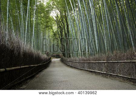 Arvoredo de bambu em Arashiyama, Kyoto, Japão
