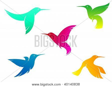 Flying color hummingbirds