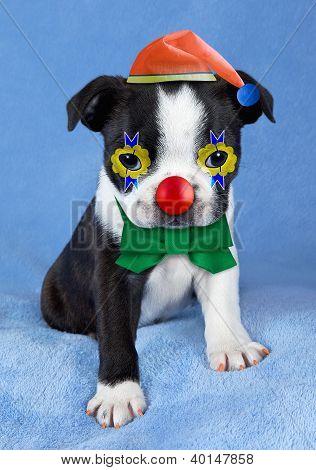 Puppy Clowning Around