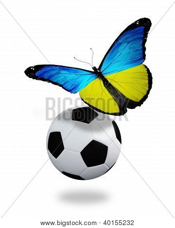 Concept - Butterfly With Ukrainian Flag Flying Near The Ball, Like Football Team Playing