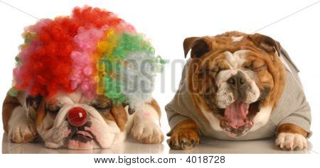 Bulldog Laughing At Clown