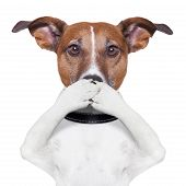 stock photo of not talking  - covering the mouth dog with his 