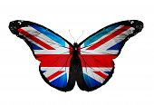 stock photo of olympiad  - English flag butterfly flying isolated on white - JPG