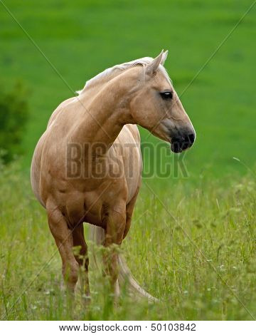 Beautiful Pale Brown Horse