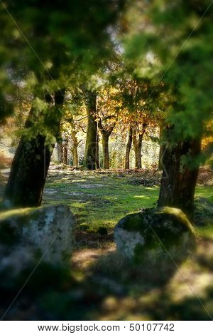 Quiet Landscape Forest