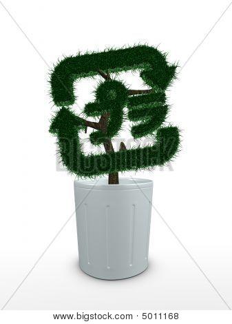Bonsai Tree, Recycle