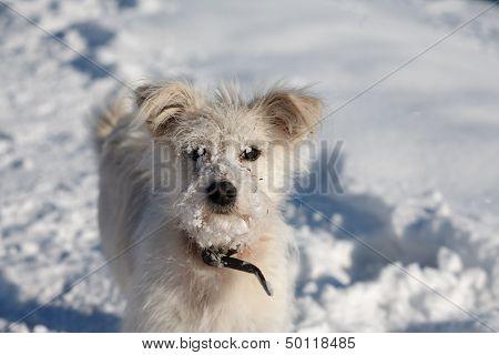 Dog On Snow