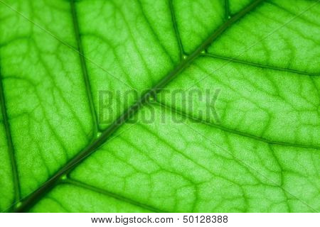 Green Plant Leaf Macro Fragment